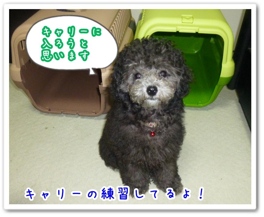 2012_7_20_01.jpg