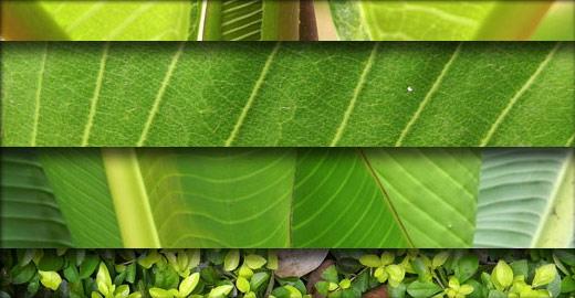 葉っぱのテクスチャ画像