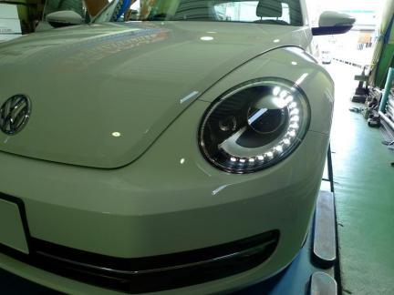 beetle_12_11_16_P2.jpg