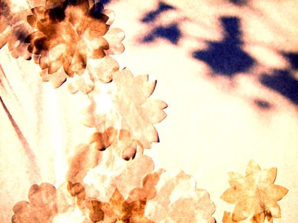 窓の花04