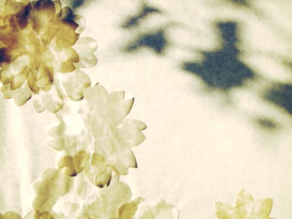 窓の花02