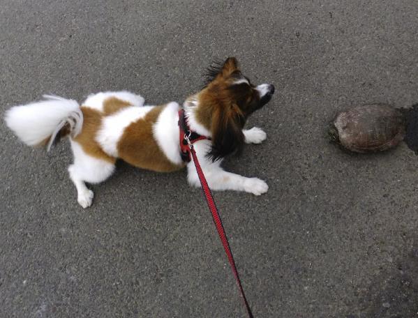 チャイと亀