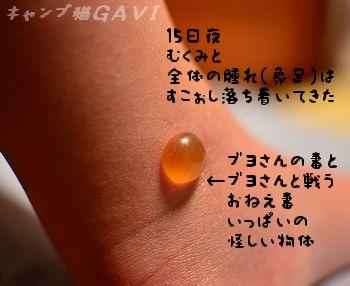 110815_6105.jpg