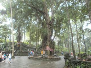 Bali0706.JPG