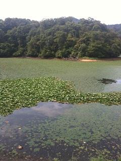 鶴岡市 大山公園 下池 1