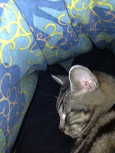 fc2blog_20121107093141894.jpg