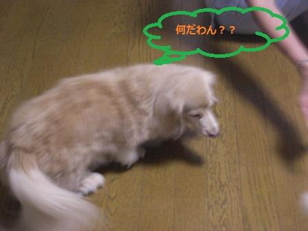 20120826009.jpg