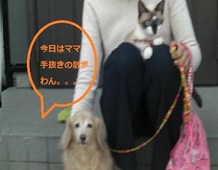 20121020007.jpg