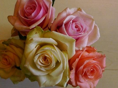 40代もピンクの効果・ピンクのバラで女子力活性&チワワ