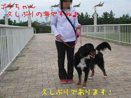 1nRAFFbDi80tEpO_1350200772_mj.jpg
