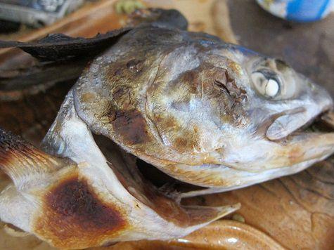 鮭の兜焼き