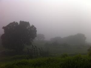 羊の国のラブラドール絵日記、霧