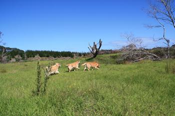 羊の国のラブラドール絵日記NEW!!写真6