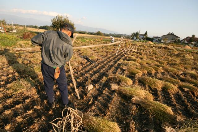 新規就農者のためのイメージ