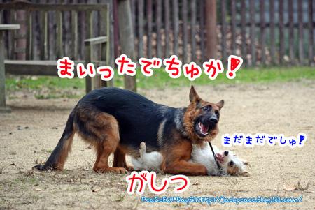 131117_yuasa11.jpg