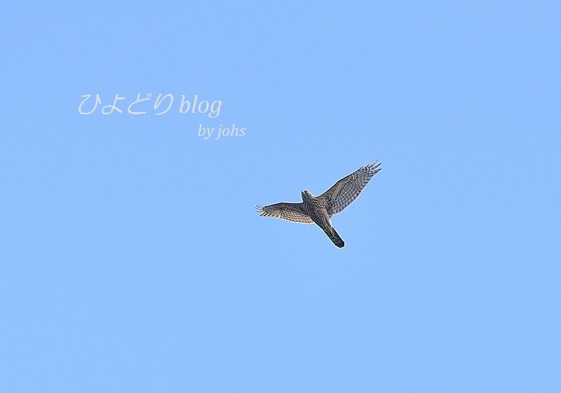 20121008_101701_02_01.jpg