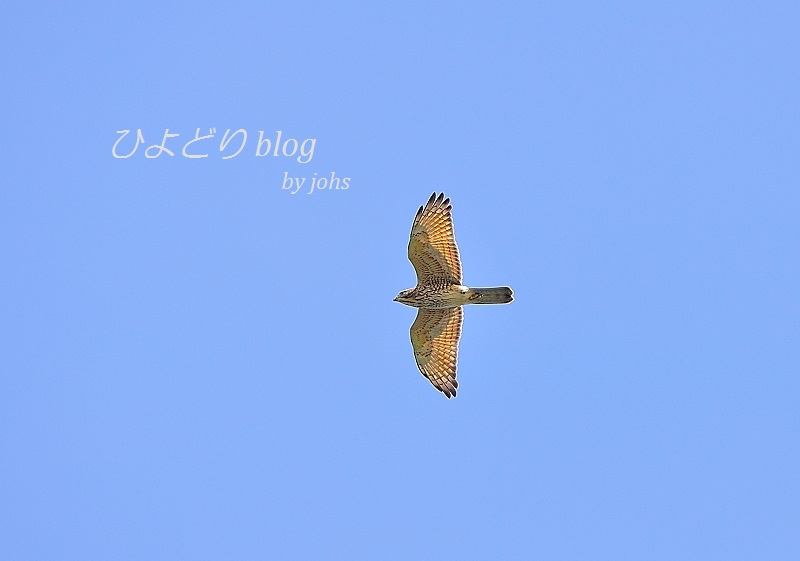 20121008_104738_01.jpg