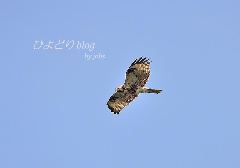 20121008_105514_01.jpg