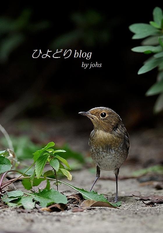 20121013_140549_01_01.jpg