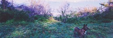 松本アルプス公園③19910504