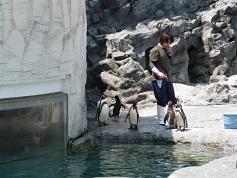 ペンギン③