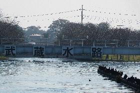武蔵水路導入口
