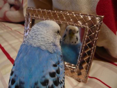 ぴーちゃんと鏡