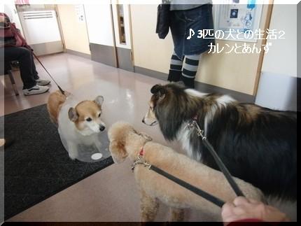 また獣医さんだよ