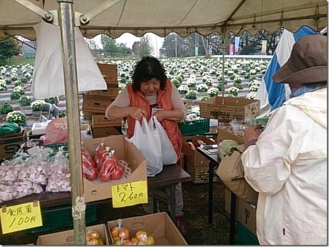 小菊の里、開花状況 (H26/10/21)