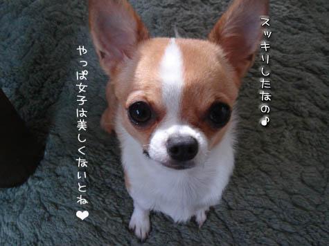 DSC096601027.jpg