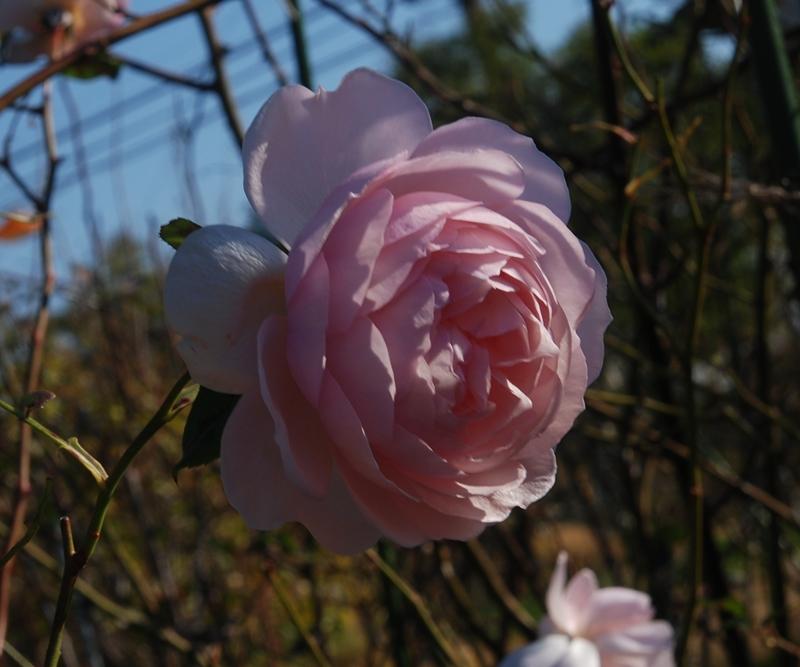 DSC_0746_2014_12_13.jpg