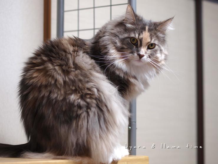 猫背の怒りんぼ
