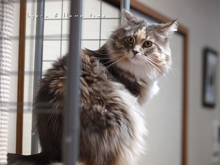 猫背のアライグマ?