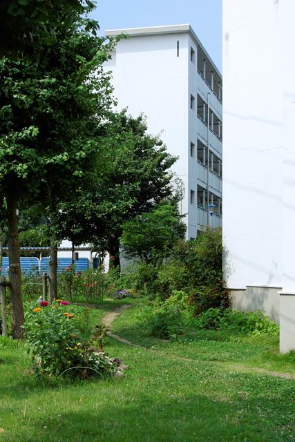 都営日野新井アパートの芝生