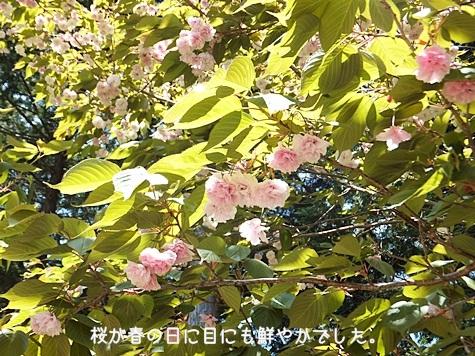 20110502-02s.jpg