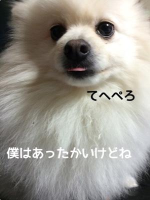 fc2blog_20141204181704368.jpg