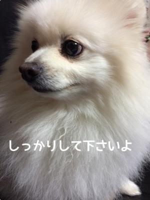 fc2blog_20141204181946da9.jpg
