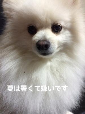 fc2blog_20141204182206a63.jpg