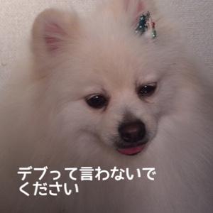 fc2blog_201412081943354d2.jpg