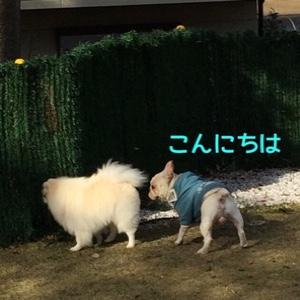 fc2blog_20141210204650ad8.jpg