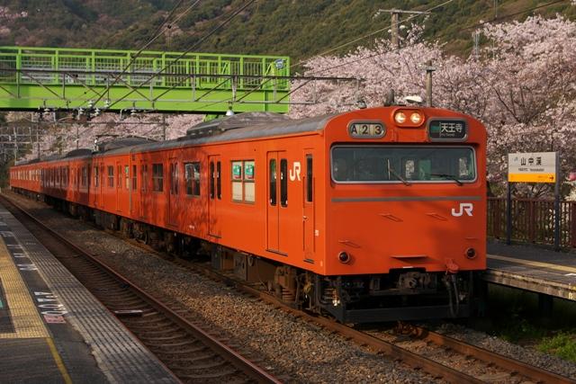 110411-JR-W-103-orange-sakura-1.jpg