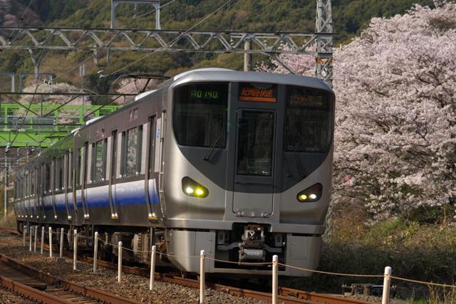 110411-JR-W-225-sakura-1.jpg
