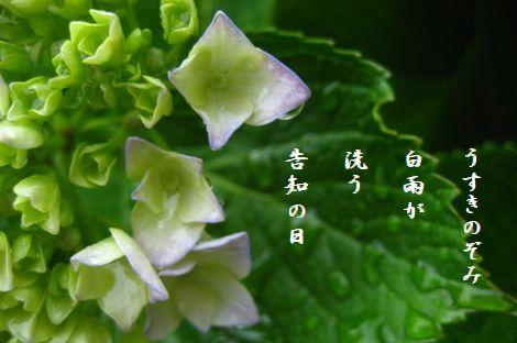 20141017045324606.jpg