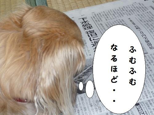 ミント新聞を・・・・読めるのか????