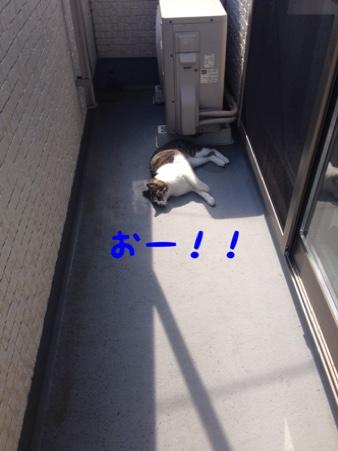 fc2blog_20140924141110e03.jpg