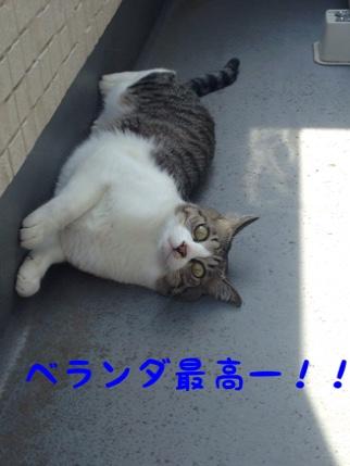 fc2blog_201409241413446ae.jpg