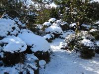 どかっと雪が積もってました