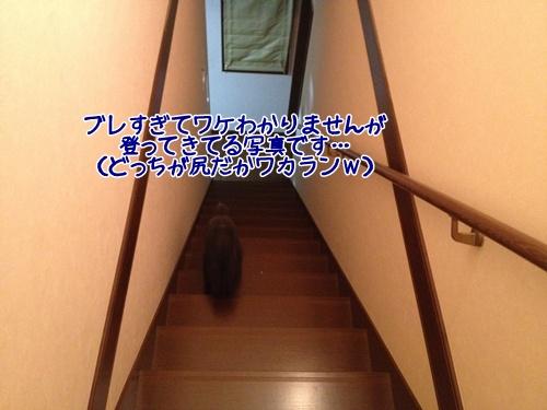 201409252242181ee.jpg