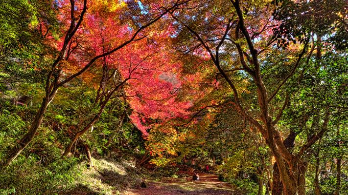 20101127継鹿尾山0050