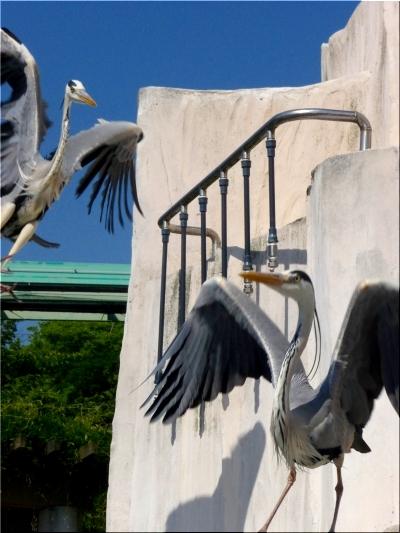 東山動物園 鳥2